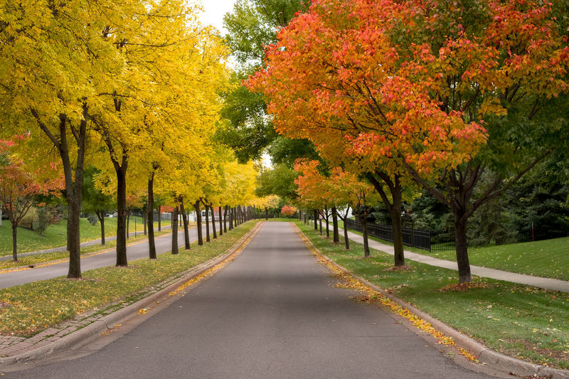 Tree Plant Change Autumn Beauty In Nature Diminishing Perspective Road No People Day Transportation Park Yellow Orange Color Outdoors Tranquility Scenics - Nature Treelined Autumn Collection Fall