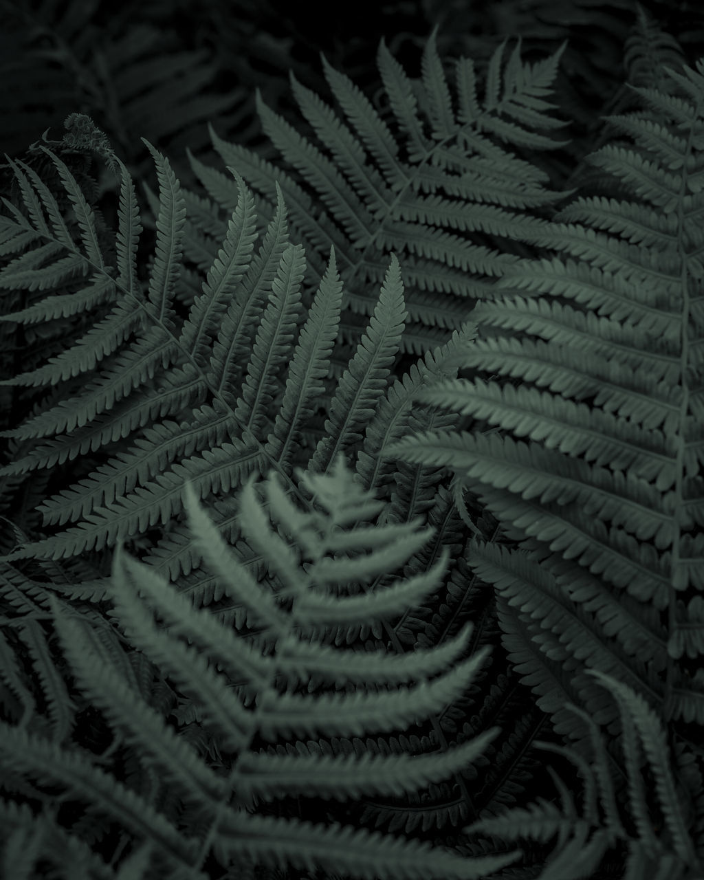 close-up, backgrounds, pattern, no people, full frame, selective focus, fern, high angle view, growth, green color, indoors, textured, natural pattern, still life, textile, plant, day, beauty in nature, leaf, softness