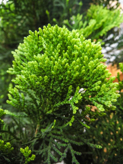 Beauty In Nature Botany Close-up Detail Green Color Growth Macro Nature Outdoors Plant