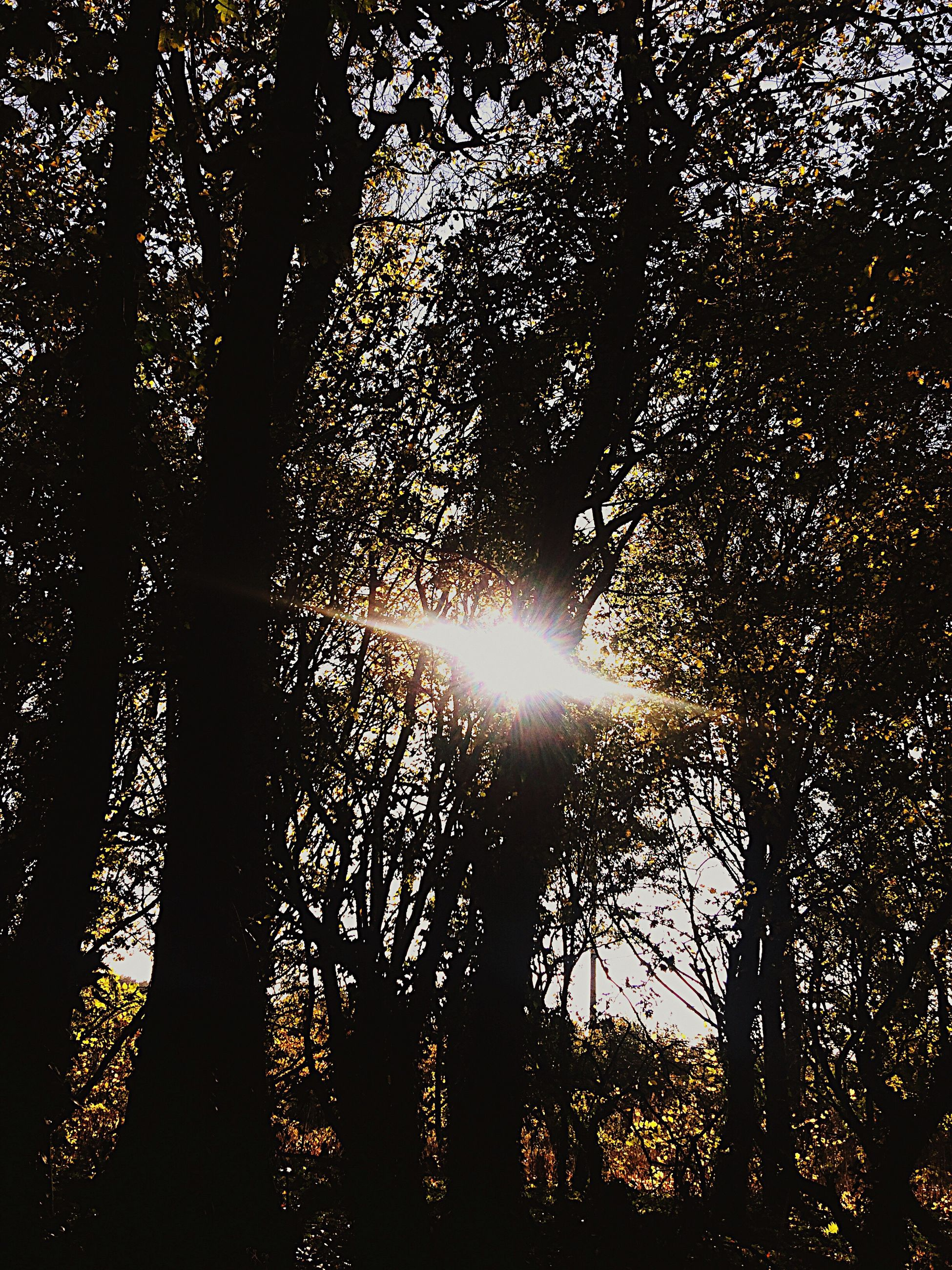 sunbeam, no people, nature, low angle view, sky, beauty in nature, outdoors, illuminated, refraction