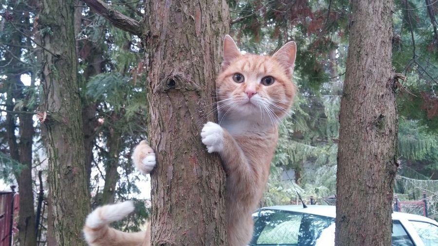 Cat ❤🐱
