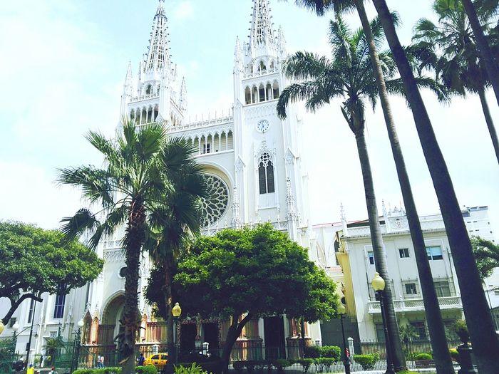 CATEDRAL Catolica Guayaquil - Ecuador Nature
