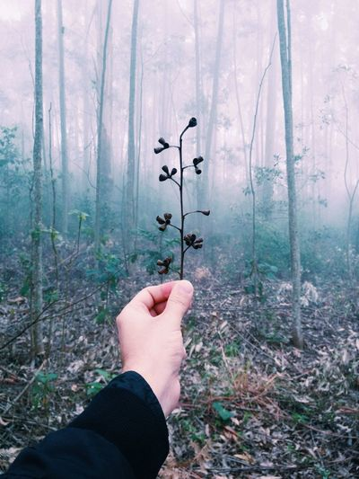 Cropped man's hand holding twig in forest during foggy weather