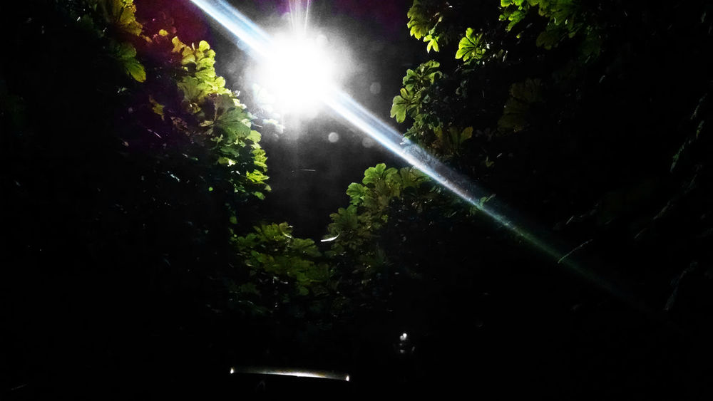 Beauty In Nature Bright Flare Glitch Green Color Cities At NightHideout Hiding Lamp Leaves Lens Flare Lights Low Angle View Mystery Nature Night Nightphotography No People Silhouette Streetlight Tranquil Scene Tranquility Tree Windshield Windshield Shots