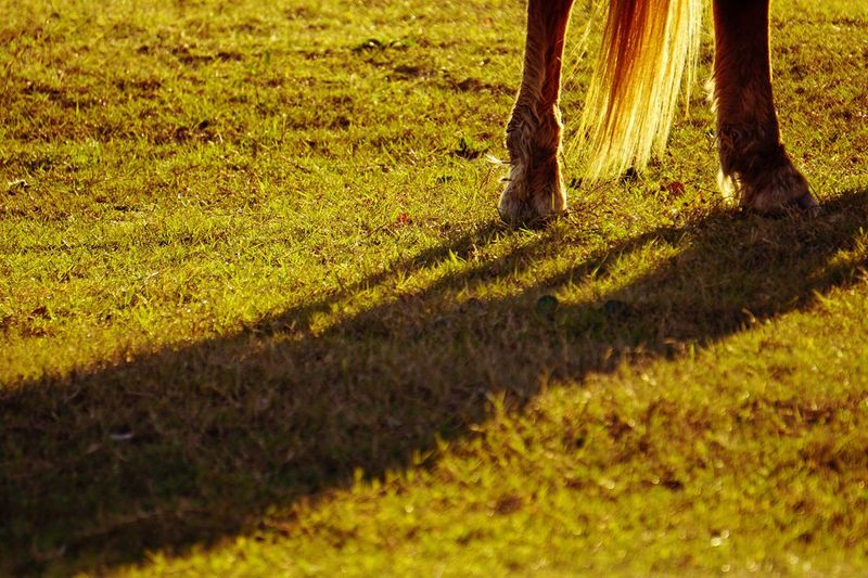 Learn & Shoot: Simplicity Wild Pony Horse Tail Tail Hooves Pony Assateague Island Assateague  Ponies Of Assateague Island In Sunlight Sunshine Sunlight Light And Shadow Sunset Afternoon Is Lazy The Weekend On EyeEm Horsing Around Backlit Shadow Enjoying Life