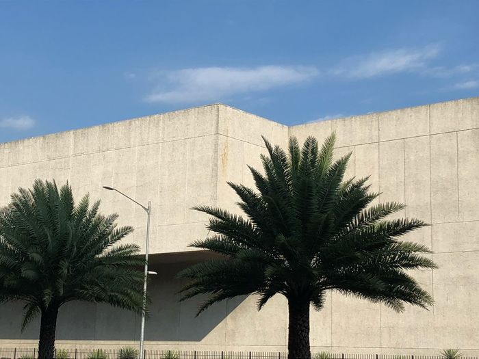 Palm trees against building