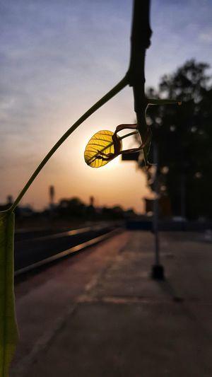 Street light on road against sky at sunset