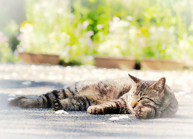 日向ぼっこ♪ 日だまり 猫ぽとれ にゃんこ Cat Cats Of EyeEm Cat Photography Catportrait ひなたぼっこ EyeEm Nature Lover EyeEm Best Shots Taking Photos EyeEm Gallery Eyemphotography