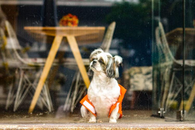 Dog Pets Domestic Animals One Animal Animal Themes Outdoors Day Mammal No People Nature Dog On The Window Glass Snob Dog The Street Photographer - 2017 EyeEm Awards