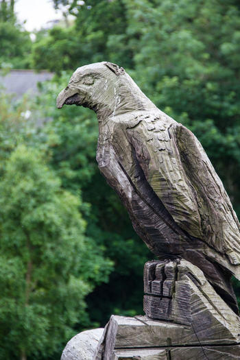 Bird Carving - Craft Product Close-up Day Eagle Focus On Foreground Hawk Nature Outdoors Selective Focus Statue Tree Wood Wood - Material Woods