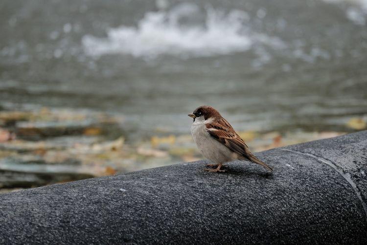 Little bird in