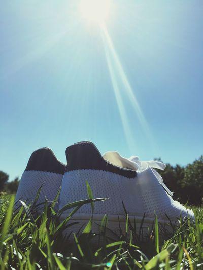 Stansmith Sunbeam Sun Blue Sunny Beauty In Nature Lens Flare Grass Park
