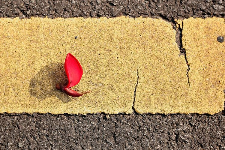 Flower on the road Close-up Outdoors Photography Eyemphotography Fotografi Beauty In Nature Fotografia Streetphotography Contemporary Image Art Flower EyeEm Nature ASIA Textured  Street Life