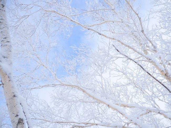 Shades Of Winter Winter Cold Temperature Snow Tree Nature Bare Tree Branch White Color Beauty In Nature Day No People Outdoors Growth Sky Close-up