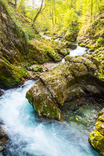 Vintgar Gorge Water Rock Beauty In Nature Rock - Object Scenics - Nature Solid Flowing Water Forest Plant Land Tree Motion Nature Long Exposure River Flowing No People Moss Stream - Flowing Water Outdoors Rainforest