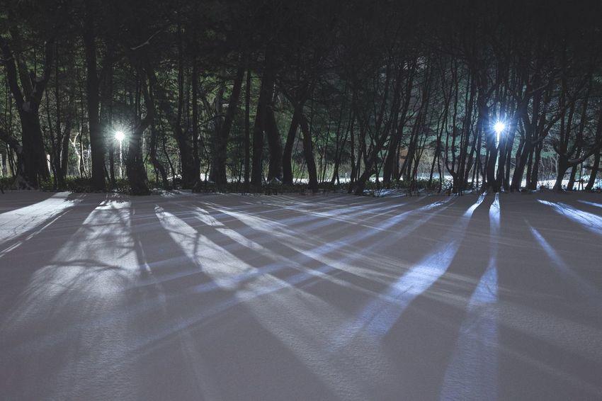 Winter Snow Japan Tree Nature Night Outdoors Tree Trunk The Way Forward No People Illuminated