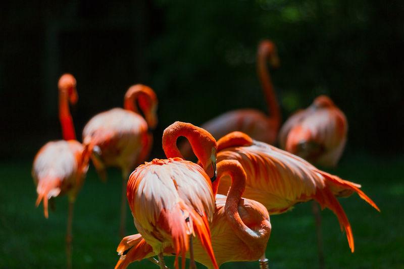 Close-Up Of Flamingos At Zoo