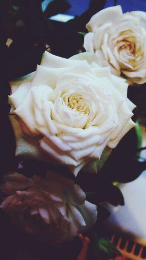 Roses ~ flower ~First Eyeem Photo
