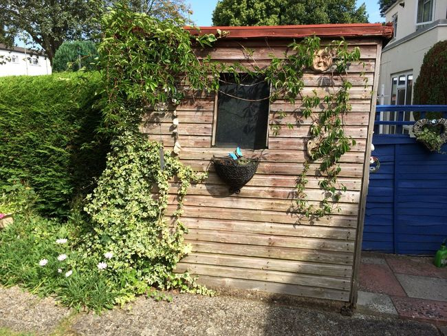 Country House Countryside Ivy Old Shed Outdoors Quaint  Shed Vine Wine Moments