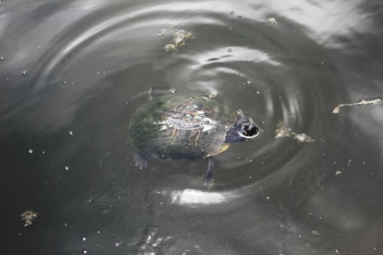Water Swimming Outdoors No People Planet Earth Day Nature Close-up Space Animal Themes Splashing Droplet turtle Tortoise Shell Turtle Tortoise Reptile Beauty In Nature