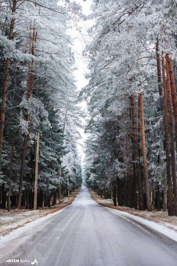 Relaxing Snow Forest Showcase: December Photo<3 скоро новый год2016