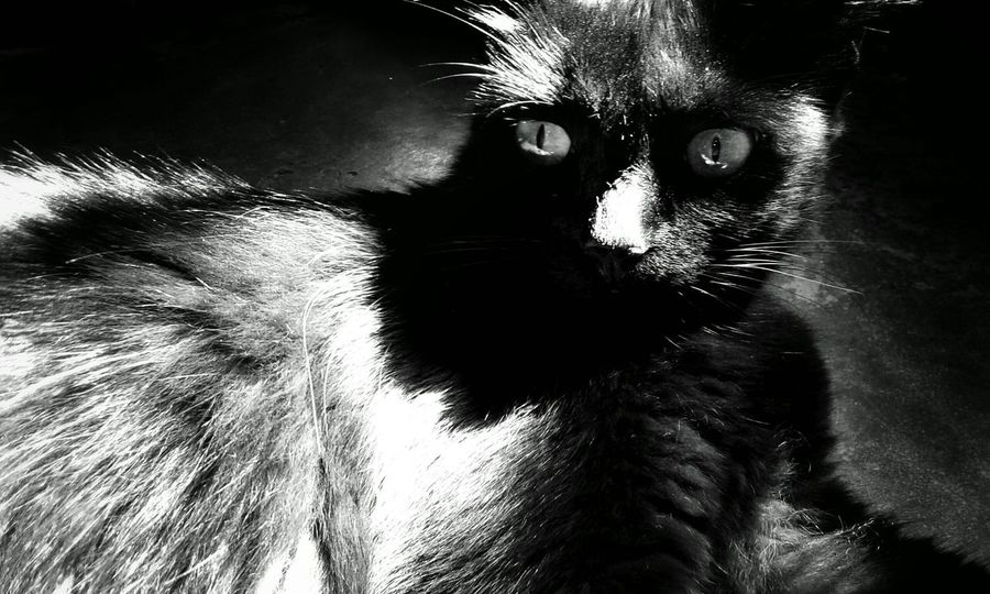 Black & White Relaxing Darkness And Light Monochrome _ Collection Mei Myblackcat