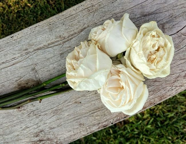 Faded roses. Day No People Close-up Flower Flower Head Outdoors Nature Beauty In Nature Dead Nature Roses White Roses White Color Faded Beauty Faded Roses Faded Rose Fragility Fragile Beauty Fragile Nature Cut And Paste Live For The Story Perspectives On Nature Visual Creativity