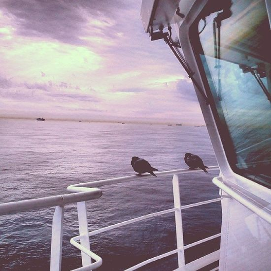 Always nice to have company,even if it's shy company Merchantmarine Shiplife Officerofthewatch Stowaways sunset sea