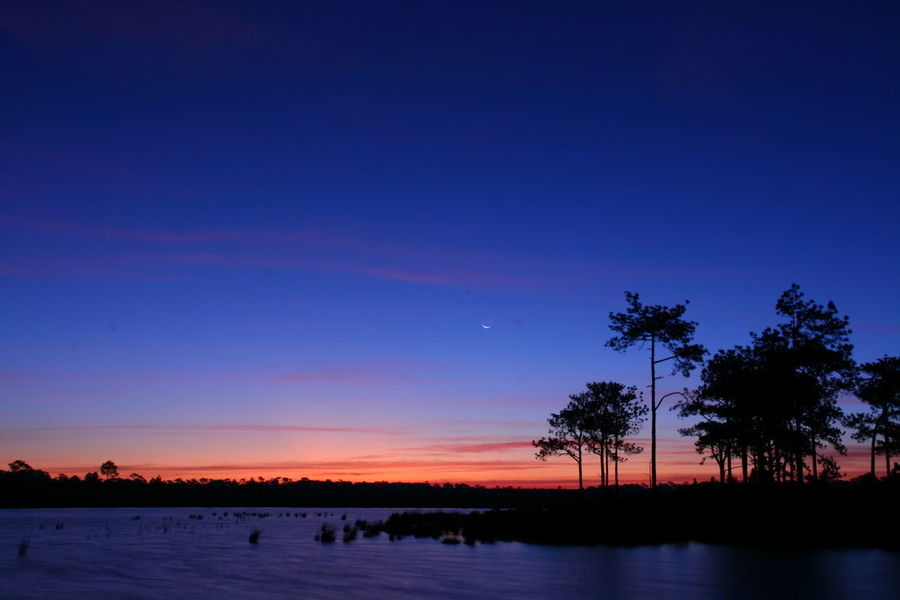 Phukradeung Sunrise Silhouette Beauty In Nature Blue Clear Sky Lake Landscape Nature Night No People Outdoors Scenics Silhouette Sky Tranquil Scene Tranquility Tree Water ภูกระดึง อ่างเก็บน้ำ พระอาทิตย์ขึ้น ป่าสน ใบไม้ ดาว