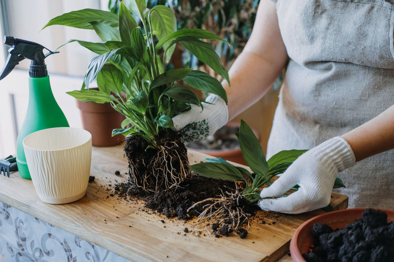 Midsection of man with potted plant on table