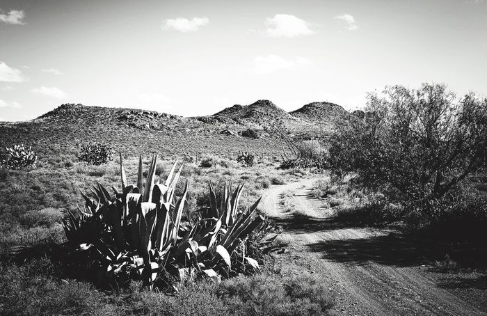 Karoo Farm Farm Landscape Cactus Arid Climate Agave Hill Physical Geography Mountain Geology Remote Nature Wilderness Area Outdoors Dirt Karoo Karoospaces Karooheartland