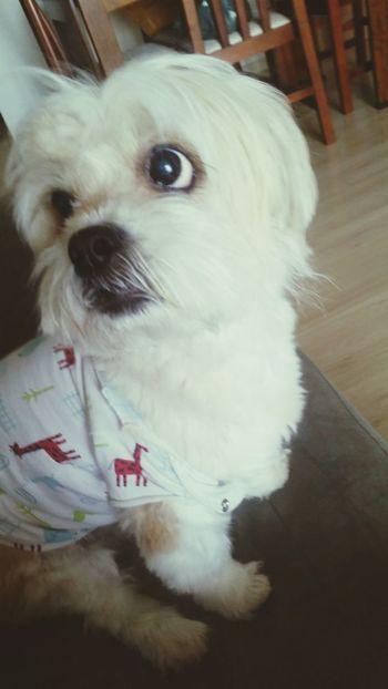 My pet Nina! 😍😍😍😍 Mypetdog