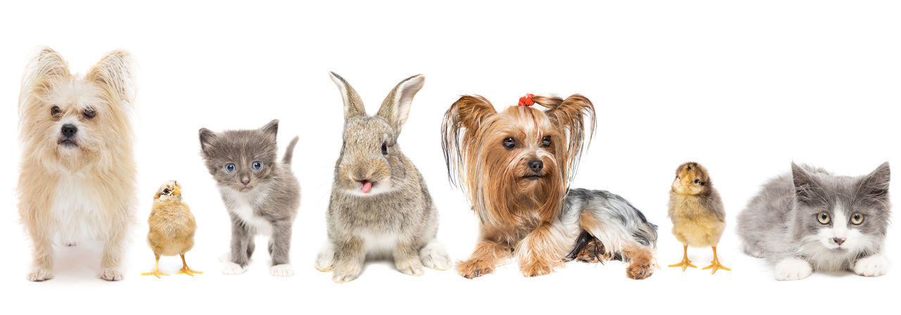 View of dogs against white background