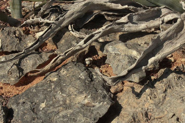 Ancient Damaged Deterioration Dirty Eroded Old Rock Rough Stone Textured
