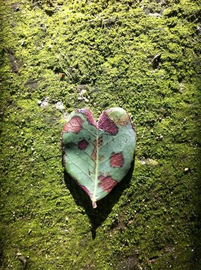 Leaf Nature Moss Heart Nature_collection Simplicity Moss Covered Concrete Heart Leaf Green Green Green!  Green On Green Still Life Still Life Photography Leaf Fantasy Leaf Photography Leaves On The Ground Leaf On The Ground Leaf Art