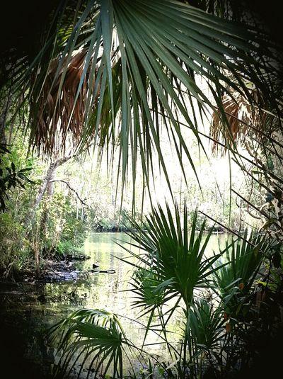 Swamp lyfe