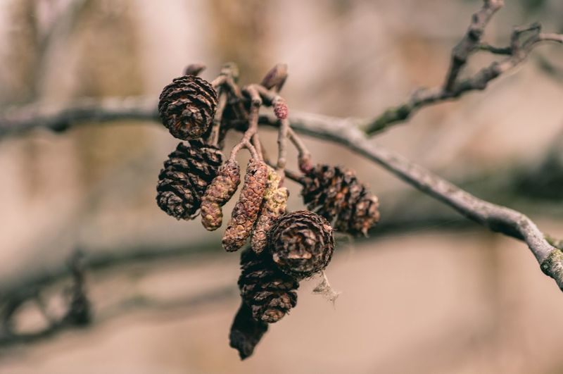 Natur Insect Close-up Animal Themes Plant Wilted Plant Dried Plant