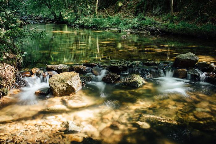 Source Source Of Water Stream Creek Brook Stone River Forest Water Reflection Nature No People Tranquility Beauty In Nature Outdoors Scenics Tree Day Motion Long Exposure Rock - Object Blurred Motion Stream Waterfall Tranquil Scene