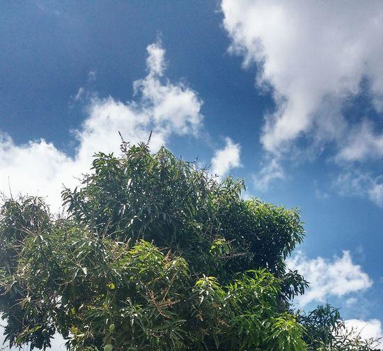 Tree Fruit Sky