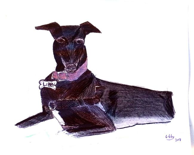 My first Biro Sketch of our Dog - Libby Arts Culture And Entertainment No People Sculpture White Background Statue Outdoors Day Greyhound Canine