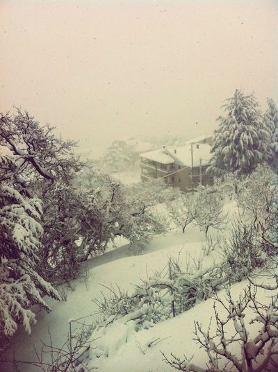 Lebanon Snow Beautiful Nature Trees ❄