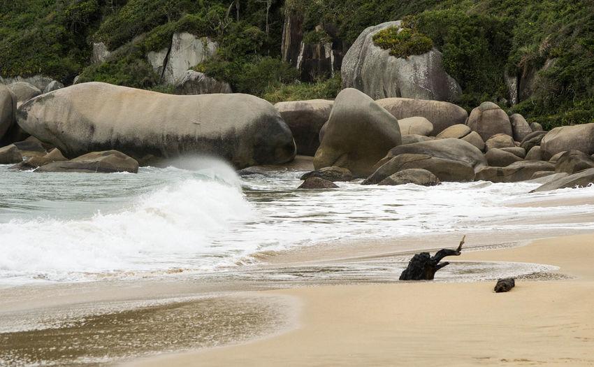 Tainha Bombinhas Beach
