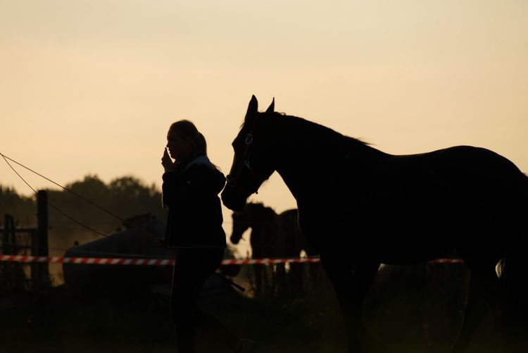 Romantic Sky Marl Love Aurumn Orange Sky Horse Silhouette Woman Silhoutte EyeEmNewHere Sunset Silhouette Rural Scene Sky Working Animal Horse