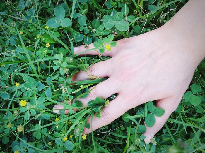 Grass Clover Clover Field Clover Flower Living The Nature Loving The Outdoors Loving The Natural World Enjoying Nature Relaxing Embracing The Nature Green Green Grass Green Nature Hand Hand In Grass Nature On Your Doorstep Natural Beauty Holidays Green Leaves Green Background Colour Of Life