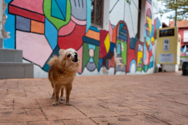 Malacca Mammal Animal Animal Themes One Animal Domestic Animals Domestic Pets Dog Canine Vertebrate Built Structure Architecture Multi Colored No People Wall - Building Feature Graffiti Day City Focus On Foreground Art And Craft