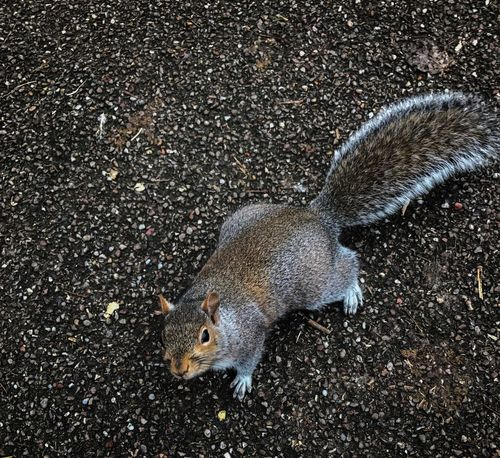 Squirrel Animal Themes Animals In The Wild One Animal Outdoors Animal Wildlife Nature Day Park Beautiful