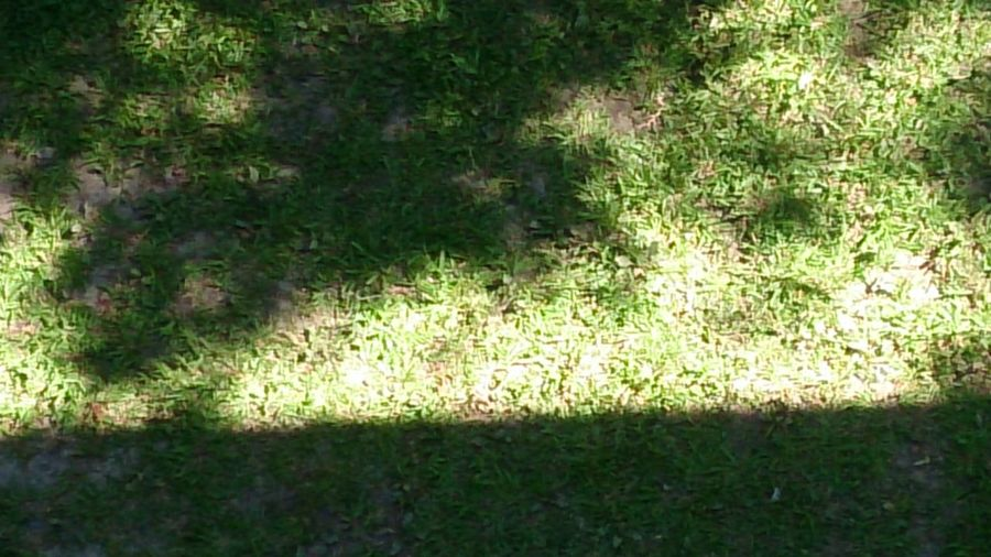 Shadow Plant Light Sunlight Green Color Grass Grass Close-up Plant LINE Growing Leaf Vein