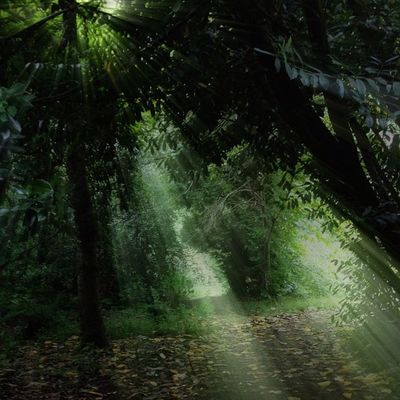 In the woods Trees Rays Improvedimage