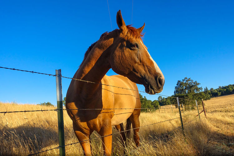 Horse Standing On Field Against Blue Sky