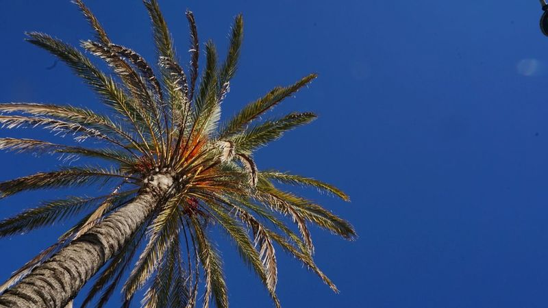 Favorite Color With Love With Him Sony Sonyalpha Sonya5100 Sonyforher Portugal Love Blue Low Angle View Clear Sky Sky Palm Tree No People Outdoors Tree Day Nature Beauty In Nature Close-up